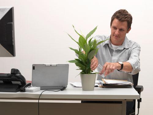 Поставь рядом с монитором зеленое растение