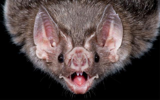 Загадку летучих мышей разгадали