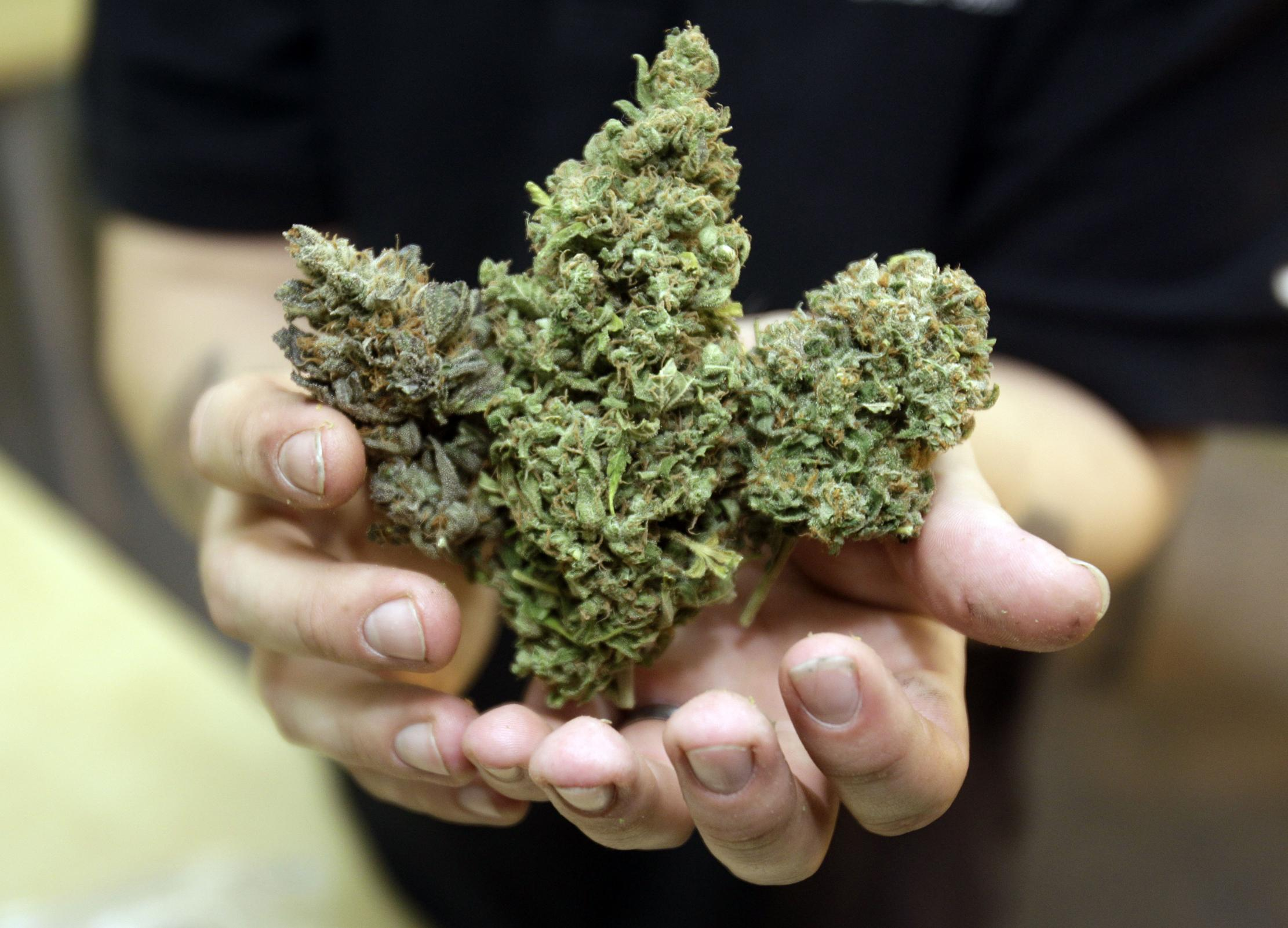 Выращенная марихуана якобы используется только в медицинских целях