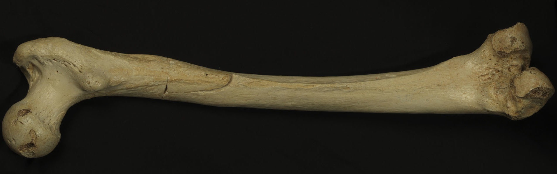 ДНК добыли из кости