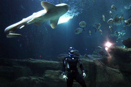 Акулы - это не только кровища и оторванные конечности. Это еще и гармония с человеком