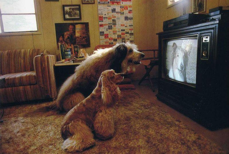Для собак экран телевизора — мельтешащие полосы