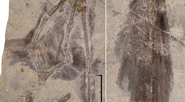 Отпечаток динозавра