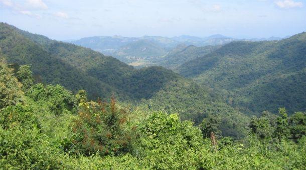 В восточных лесах Гималаев живет самая большая популяция тигров