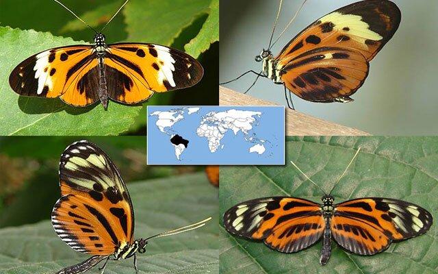 Бабочки отпугивают хищников окраской