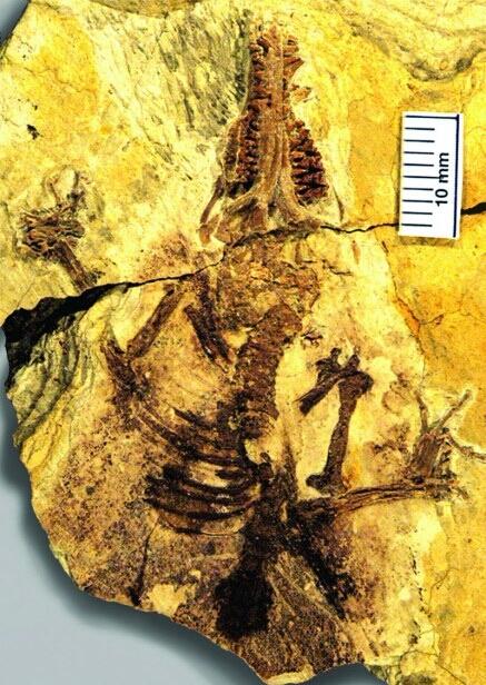 останки самого древнего человека нашли в