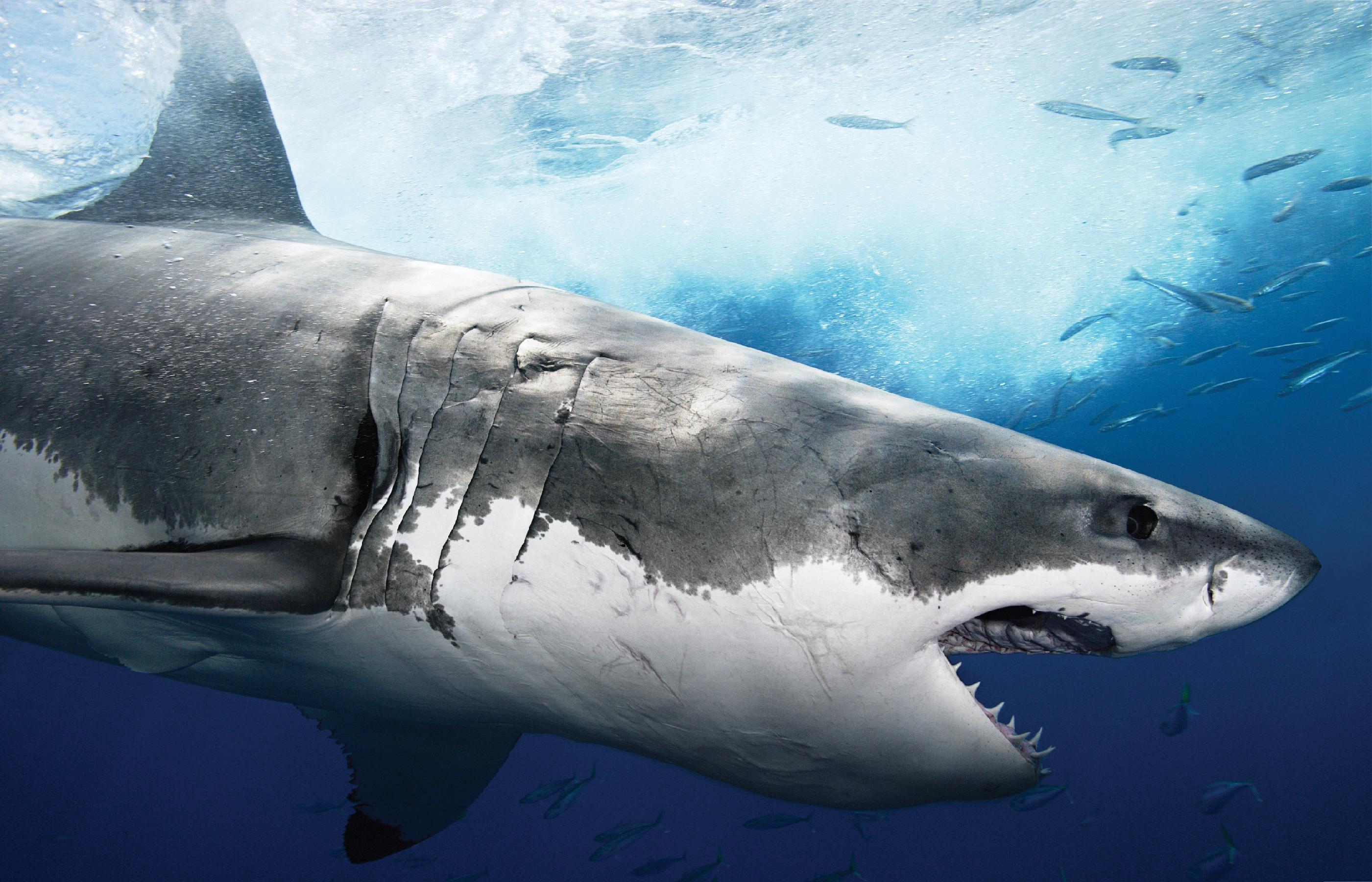 Секс у акул 3 фотография
