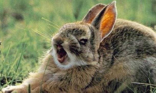 Заяц и диссертация love is Дневники bigmir net Сидит заяц на пеньке что то пишет Бежит мимо лиса Что пишешь заяц Диссертацию О чем О том как зайцы лис едят Да где ты такое видел