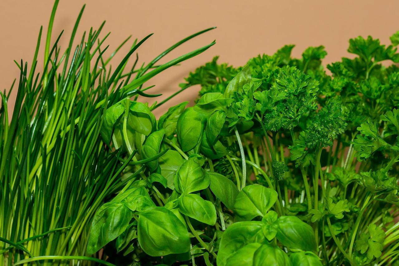 зелень выращенная в теплице