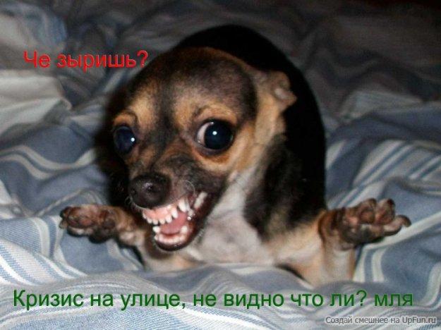 привет прикол:
