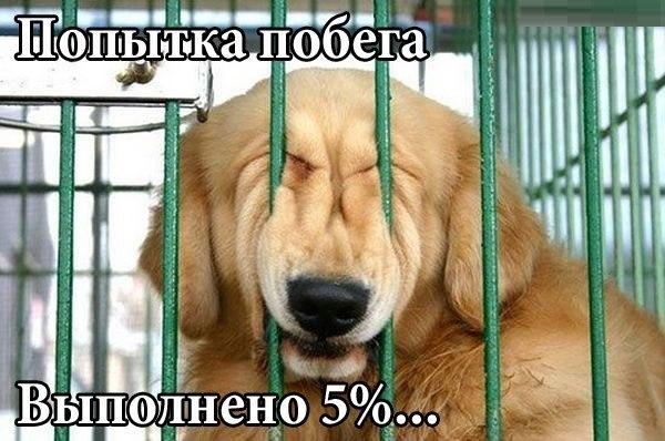 Котоматриця!)))) - Страница 10 241800_561971
