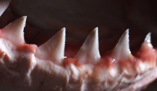 Скачать фильмы про акул и монстров