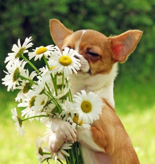 Открытки поздравления животным