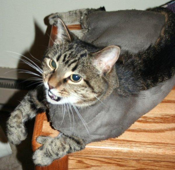 Красивые и смешные кошки (57 фото)