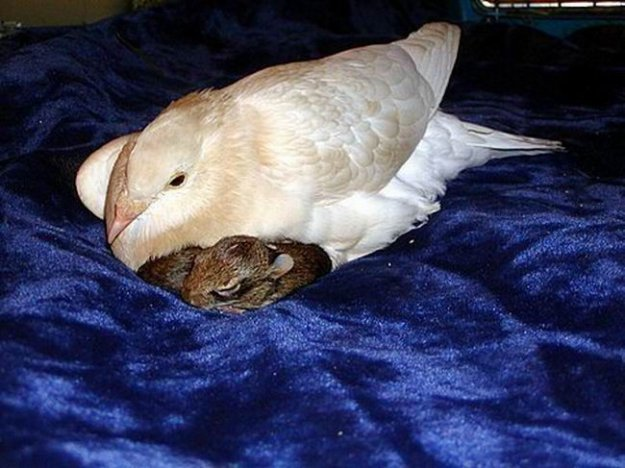 От читать далее семья для кроликов 4
