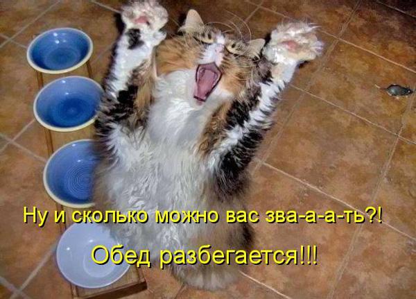 Животные теги животные коты