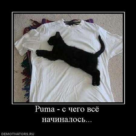Котоматрица и демотиваторы с котами