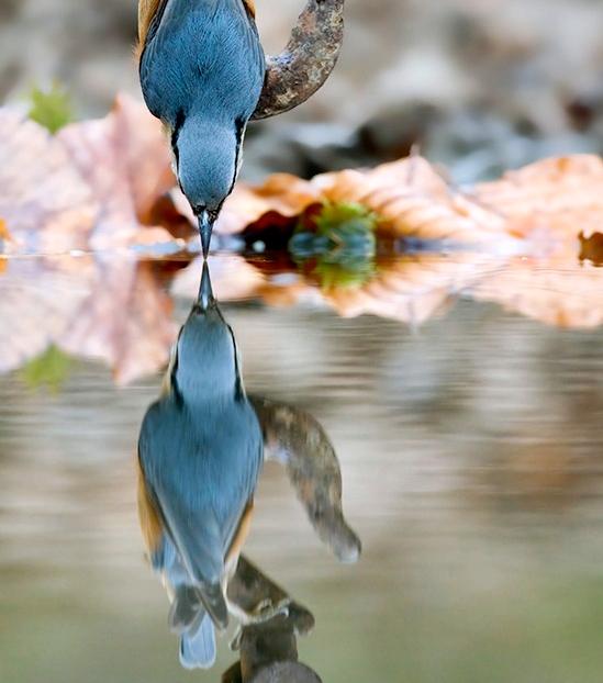 Отражение... Перевёрнутый мир...