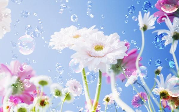 Красивые широкоформатные обои с летними цветами