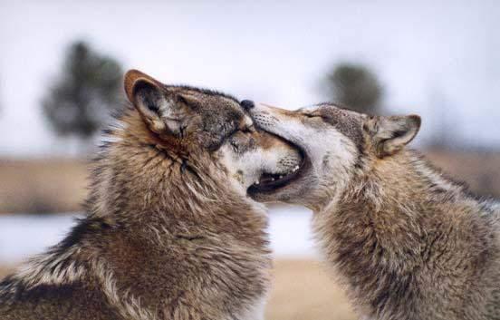 Такие разные смешные животные 15 фото