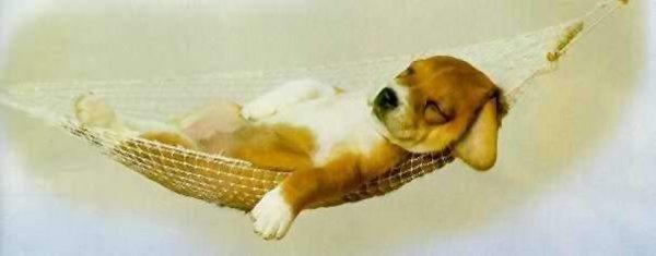 Собака с ночной смены )))