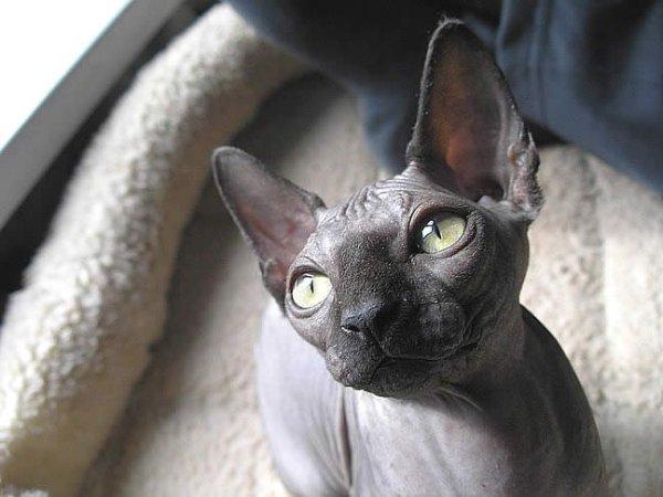 Самые лучшие картинки и фото кошек и котят, фото приколы с кошками.