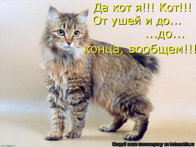 Порода Курильский ботейл: кошко-заяц или кошко-рысь?
