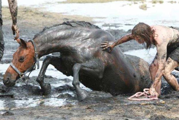 Спасение застрявшей лошади