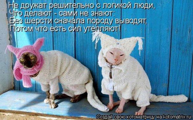 Котоматриця!)))) - Страница 9 206551_467347