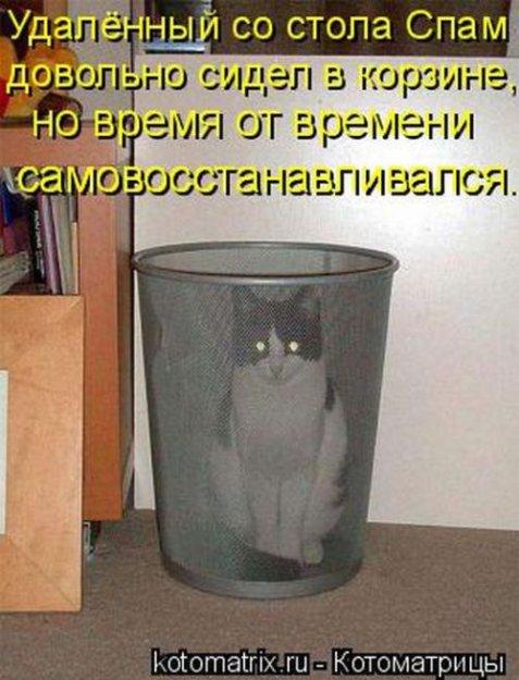Котоматриця!)))) - Страница 9 206551_467359