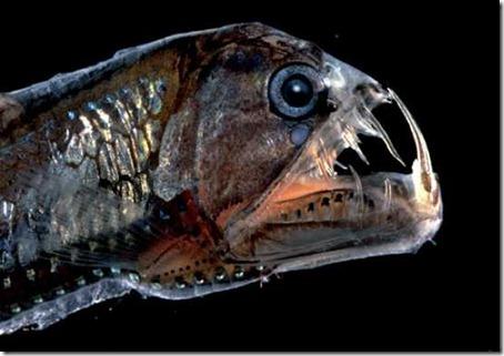 10 необычных живых существ