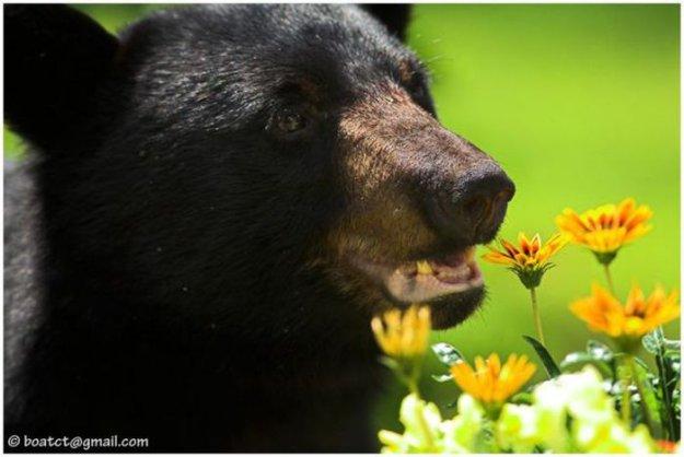 Большой медвежий пост (72 фото)