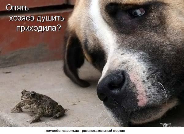 http://bm.img.com.ua/img/prikol/images/large/2/3/144832_248109.jpg