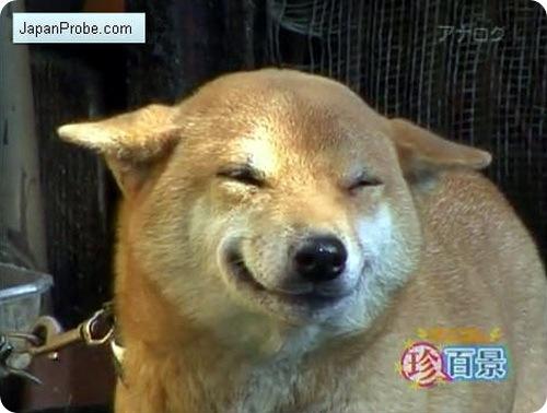 Собаки улыбаются?