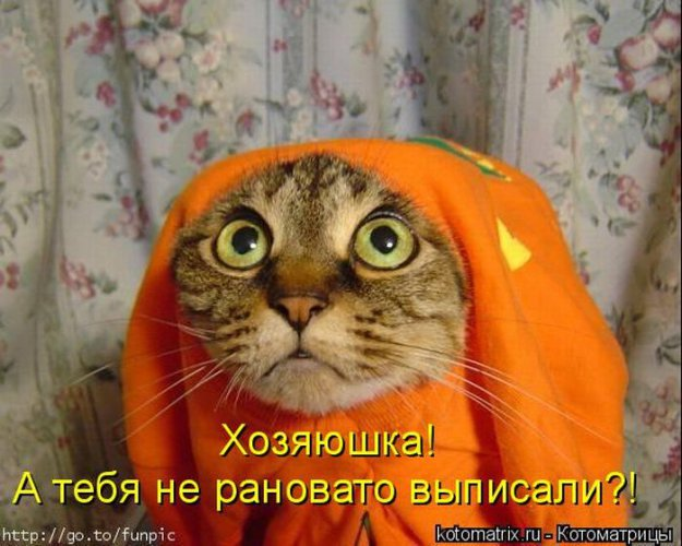 http://bm.img.com.ua/img/prikol/images/large/2/3/173332_348040.jpg