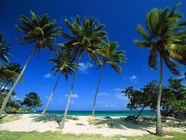 Картинка Доминиканская Республика.  Bacardi Beach.