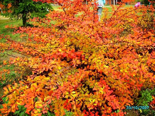 ароматы, когда желтеют листья в архызе волосы короткие