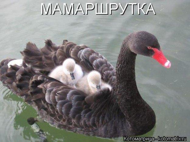 Котоматриця!)))) - Страница 10 228982_525398