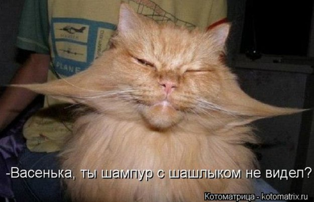 Котоматриця!)))) - Страница 10 228982_525403