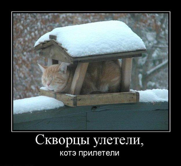 КотЭ - он такой разный...