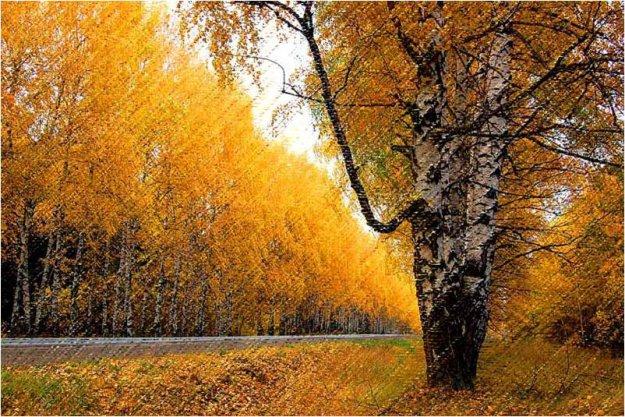 Вышивки осень название осень в парке