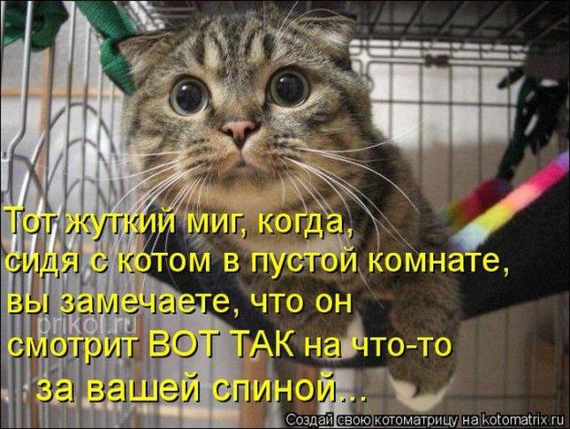 Котоматриця!)))) - Страница 10 234123_538967