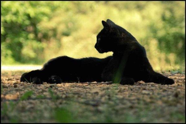 схема вышивки черный кот