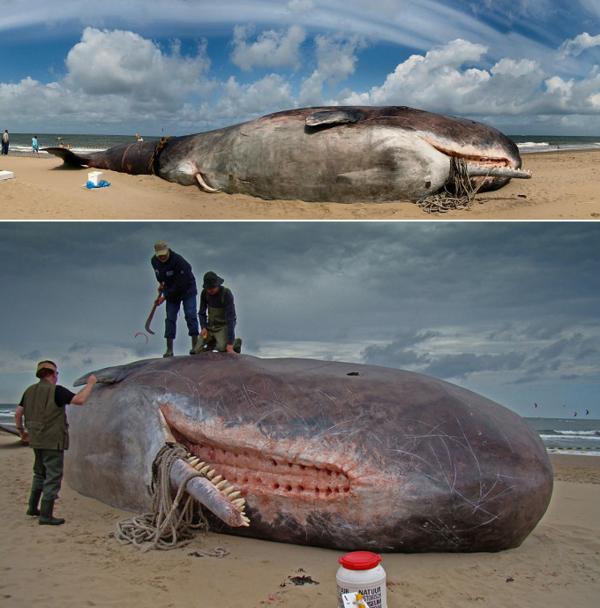 Чудо юдо рыба кит