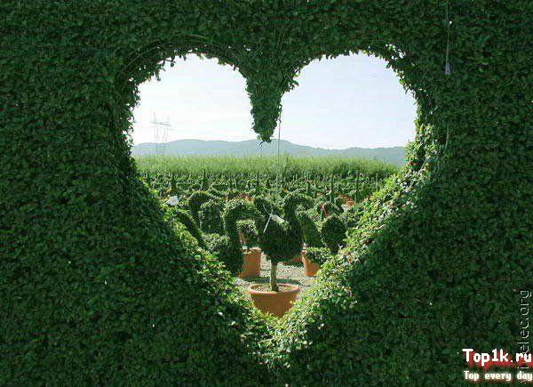Классные картинки про любовь любимой