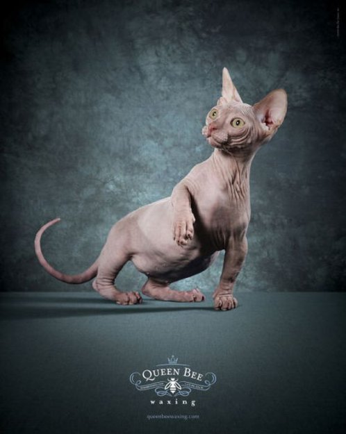 Креативная реклама с участием животных