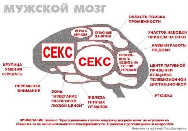 фото мозг женщины