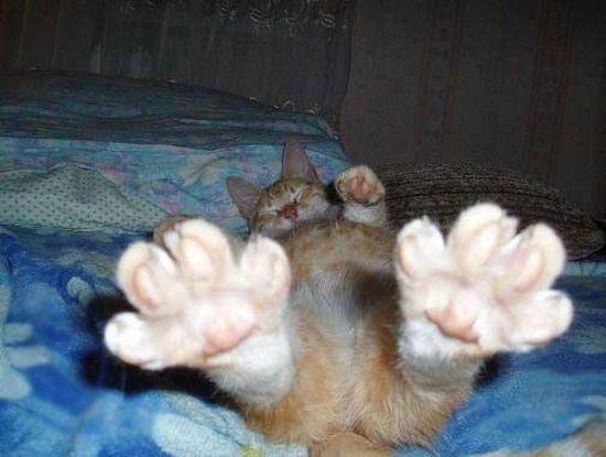 Животные теги животные собаки коты