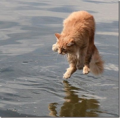 По запросу коты приколы картинки