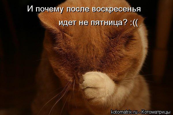 Забавные коты картинки